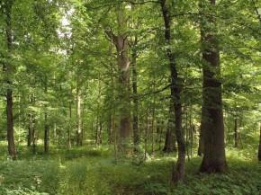 Norėčiau parduoti mišką - kiek jis vertas?